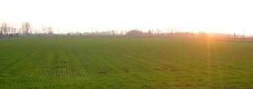 Paesaggio agricolo della Pianura Padana, a Chiaravalle (Milano; 2007)
