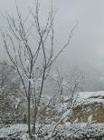 Copertina di dicembre 2018 - Alberello sotto la neve.