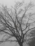 Copertina di marzo 2019 - Albero nella nebbia