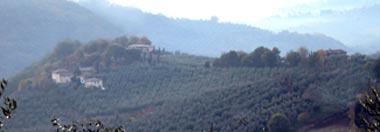Paesaggio autunnale ad oliveto e boschi sulle colline della Sabina (RI, 2005).