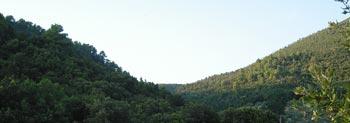 Paesaggio boschivo in Umbria nei pressi di Trevi, al tramonto (2006).